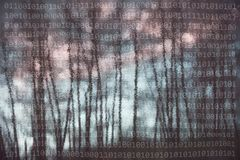 Abstract binary numbers with reflection silhouettes of trees. Abstract silhouettes of trees reflection in the water with binary numbers. Artistic nature Royalty Free Stock Image