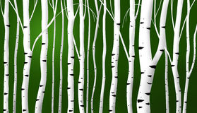 Abstract birch stems background royalty free illustration