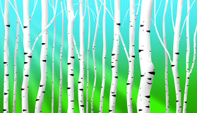 Abstract birch stems background. Abstract birch stems illustration as spring background Stock Images