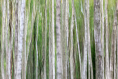 Abstract Birch tree Stock Photos