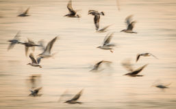 Abstract birds flight speed movement. Long exposure abstract birds in flight speed movement over water Royalty Free Stock Image