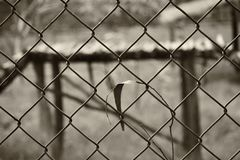 An abstract black and white back ground image of an ironed fence stock images