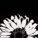 Abstract black and white gerbera flower Stock Photo