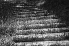 Abstract black and white image close up concrete footpath or walkway on green grass surrounded with green bush background. Royalty Free Stock Photography