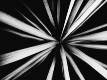 Abstract black and white plant top view stock photos