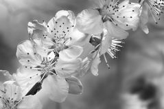 Black and white Spring concept Stock Images