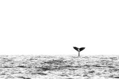 Abstract Black and White Whale Tail on Ocean Horizon. Abstract single humpback whale tail in black and white with large white space above horizon Royalty Free Stock Photo