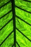 Abstract blad en zijn adersachtergrond 4 groene zwarte in Royalty-vrije Stock Foto's