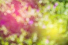 Abstract bladgras helder en zonnig als achtergrond het onduidelijke beeld van de nadruklens Stock Afbeelding
