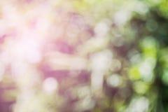 Abstract bladgras kleurrijk en zonlicht als achtergrond het onduidelijke beeld van de nadruklens Stock Foto's