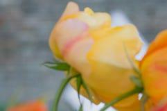 Abstract bloemenonduidelijk beeld in schaduwen van geel Vage rode bloemachtergrond voor tijdschriften en boekjes Stock Fotografie