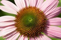 Abstract bloempatroon Royalty-vrije Stock Afbeeldingen