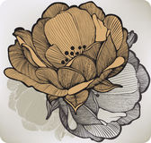 Abstract blossoming flower. Vector illustration. Royalty Free Stock Photos
