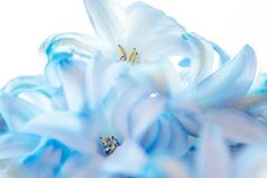 Abstract blue floral blurred background. Macro photography. fine art. Floral blue blurred background with macro delicate flower abstract picture. Beautiful macro stock photos