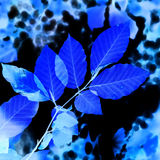 Abstract blue leaves Stock Photos