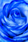 Abstract Blue Rose Stock Image