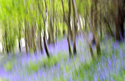 Abstract bluebells Stock Images