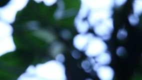 Abstract Blur background macro shot. Abstract Blur background macro leaves stock footage