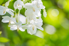 Abstract blur background of white flowers. royalty free stock images