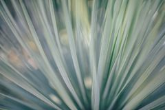 Abstract, Blur, Bright, Flare Stock Photography
