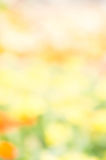 abstract blur color nature flower outdoor style background yello Royalty Free Stock Photos