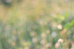 Abstract blur grassland bokeh Royalty Free Stock Image