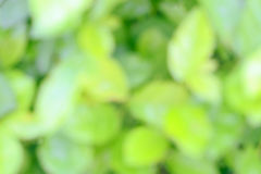 Abstract Blur of green bokeh Royalty Free Stock Images