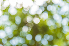 Abstract blur of nature with bokhe of light through the trees royalty free stock photo