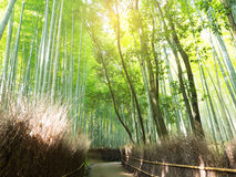 Abstract blur and soft of green bamboo forest Stock Image