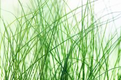 Abstract blured green grass background. Natural texture Royalty Free Stock Image