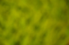 Abstract blured out of focus green background Stock Image