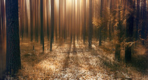 Abstract blurred autumn landscape. Fairy-tale forest Stock Photos