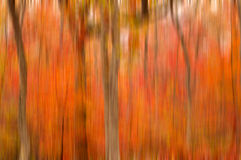 Abstract blurred background. Autumn trees Stock Photo