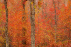 Abstract blurred background. Autumn trees Royalty Free Stock Images