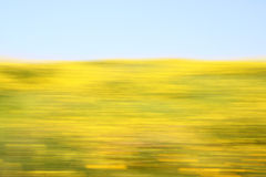 Abstract blurred background with floral bokeh view . ready for typography motion blur Stock Photos