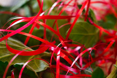 Abstract blurred background of red ribbons and green leaves Stock Photos