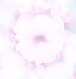 Abstract blurred beautiful Hibiscus in soft color flower background Royalty Free Stock Images