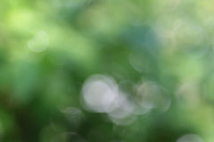 Abstract blurred beautiful natural background Royalty Free Stock Images