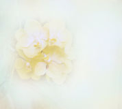 Abstract blurred beautiful orchid flower soft color for background Royalty Free Stock Photo