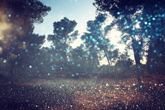 Abstract blurred dreamy woods and glitter bokeh lights. Abstract blurred dreamy mystery fairy woods and glitter bokeh lights. Filtered image and textured Royalty Free Stock Images