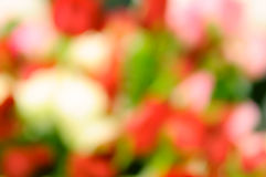 Abstract blurred flower background Stock Photos
