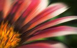 Abstract blurred flowers Stock Images