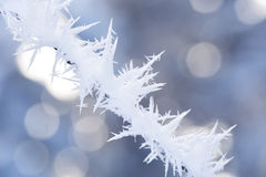 Abstract blurred frosty branch covered with frost Royalty Free Stock Photos