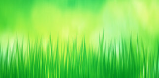 Abstract blurred green grass illustration Stock Photography