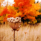 Abstract blurred image of autumn time as a background Stock Image