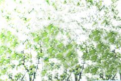 Abstract blurred image of green foliage background stock image