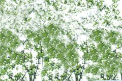 Abstract blurred image of green foliage background royalty free stock photo