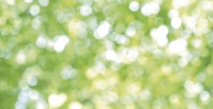 Abstract blurred light bokeh nature background of green leaves Stock Images