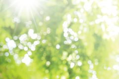 Abstract blurred light bokeh nature background of green leaves Stock Photos