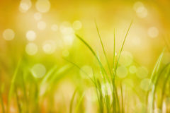 Abstract blurred meadow Royalty Free Stock Photo
